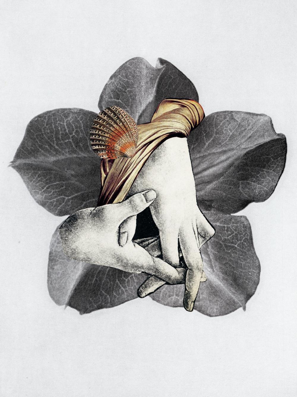 Zelan-collage-15