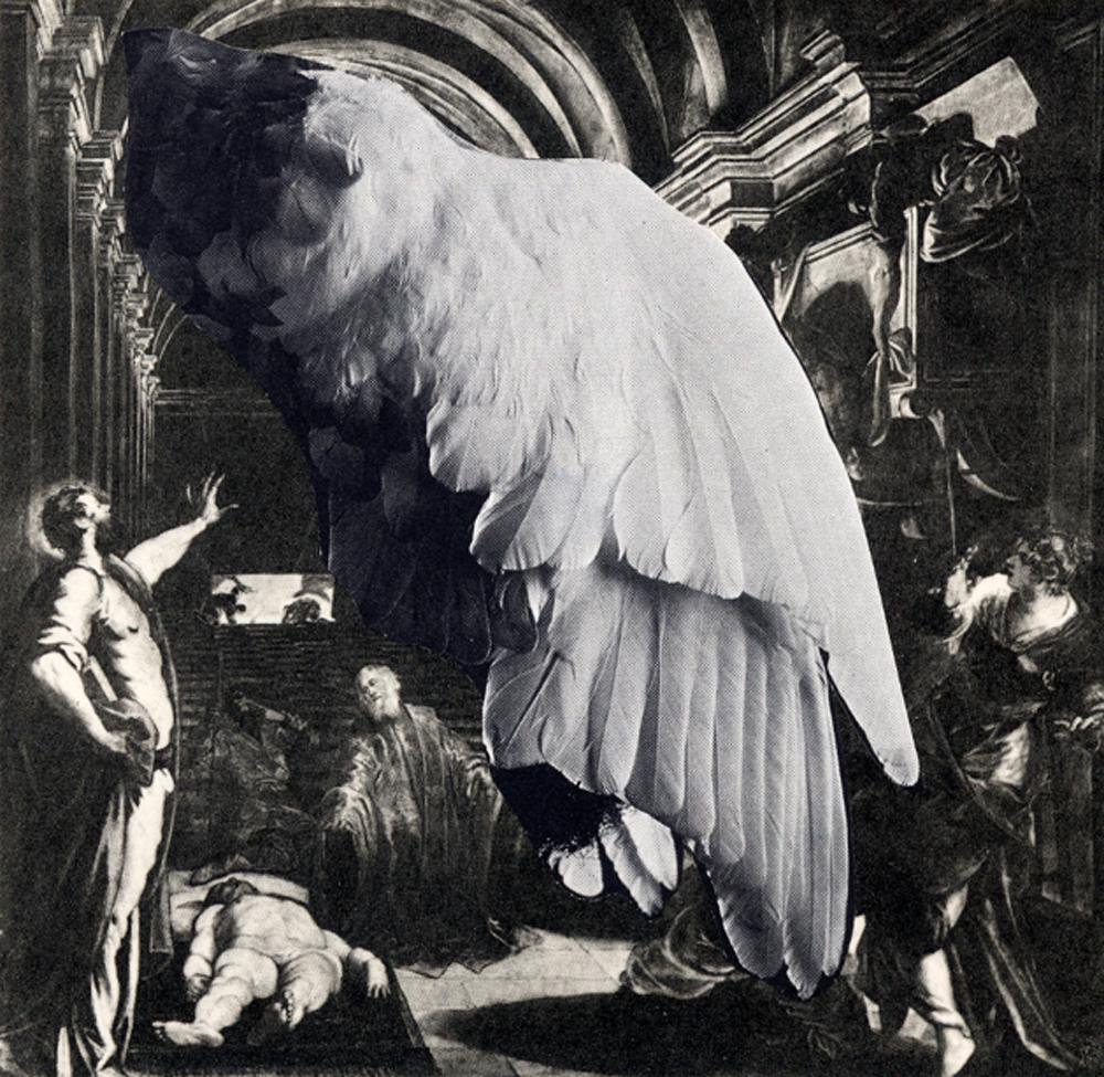 Zelan-collage-16